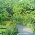 山道・奥は暗い森に続いている…結構急な傾斜もあるので注意