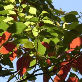 新緑と紅葉