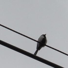 一匹の小鳥